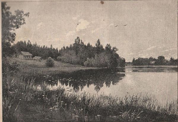 Рис. 118. Растительность береговъ озеръ Новгородск. губерніи,